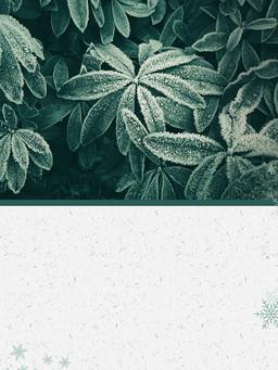 綠葉上的霜傳統霜降節氣背景素材