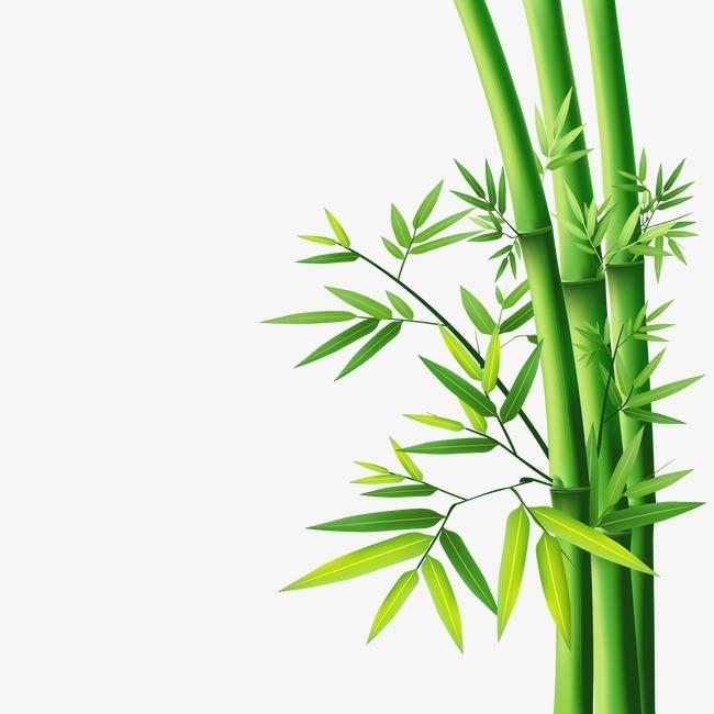 关于竹子最新的头像