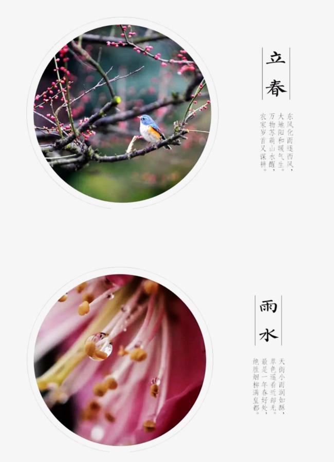 立春雨水装饰图