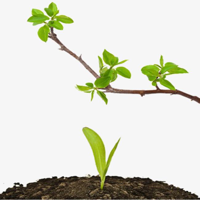 树枝图片下载 嫩芽 春季 绿色 png 【本作品下载内容为: 花草树木发芽