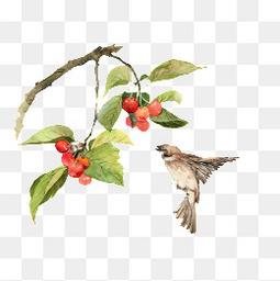 二十四番花信风-立春-二候樱桃