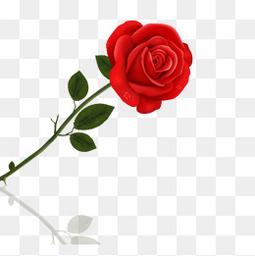 一支红色玫瑰花