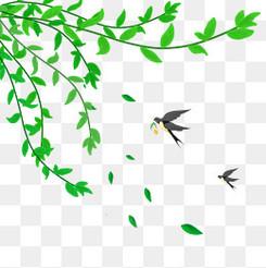 春天手繪柳條燕子小清新元素