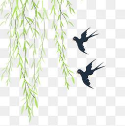 柳树绿色柳条新柳燕子春二月三月