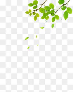 漂浮树叶装饰元素