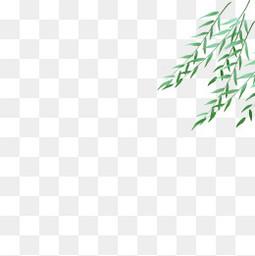 春天夏天手绘植物小清新柳枝