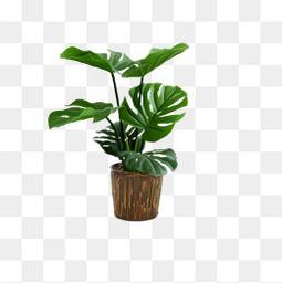 欧美流行插花 绿植物 鲜花软装配饰 艺术插花 花艺艺术