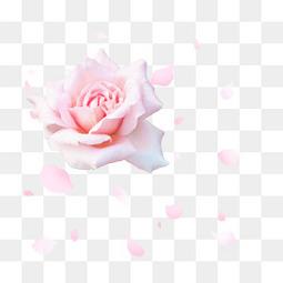 卡通鲜花鲜花海报背景 粉色玫瑰花