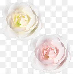 唯美花卉图片花朵粉色玫瑰花