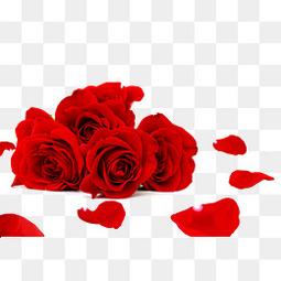 红色玫瑰花鲜花特写