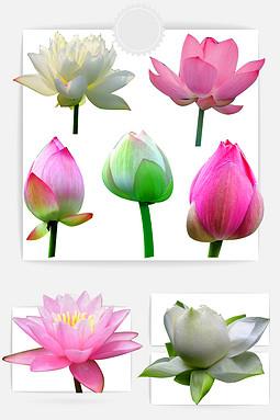 花朵荷花元素图形图标